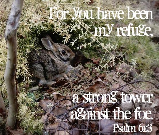 Psalm 61:3
