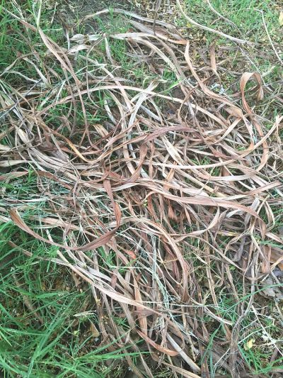 BirdsNest planter grass